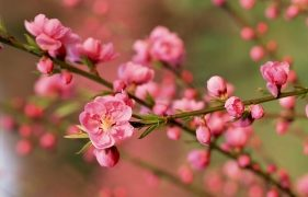 Top 5 Loài hoa Tết có độc bạn phải cẩn thận
